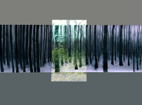 forest Project7.jpg