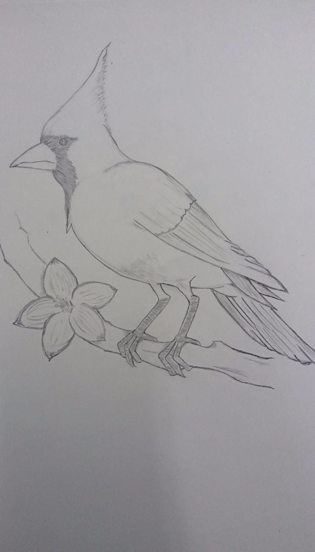 """Cardinal"" - Drawing Workshop June 9th Friday 4:30-7:00 Michaels Craft Store- Brier Creek,"