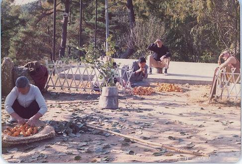 감을 수확하는 마을가족들 모습 (1975년 11월).jpg