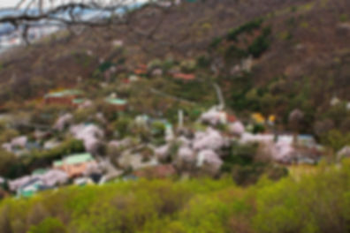 라자로마을 봄전경(수정).jpg