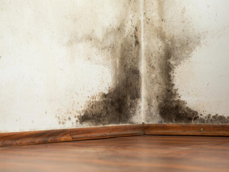 How dangerous is black mold to health?
