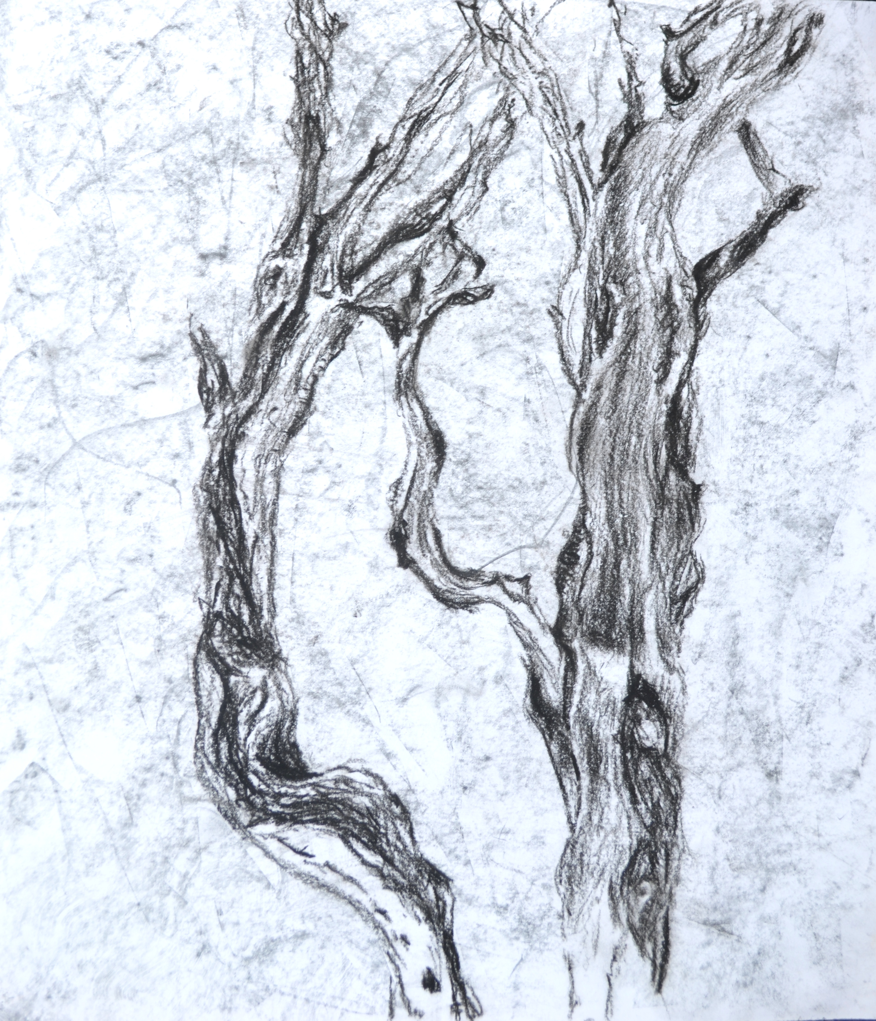 Branches. Charcoal.
