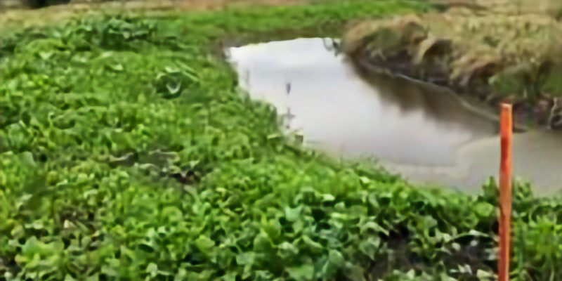 Tour a permaculture property