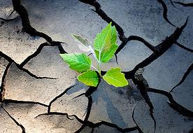 resilience plant.jpg