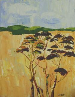 Field in Dingli