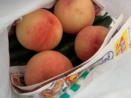 お客様から桃を頂きました!