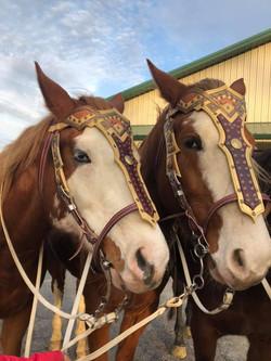 Wild Together Trick & Roman riding
