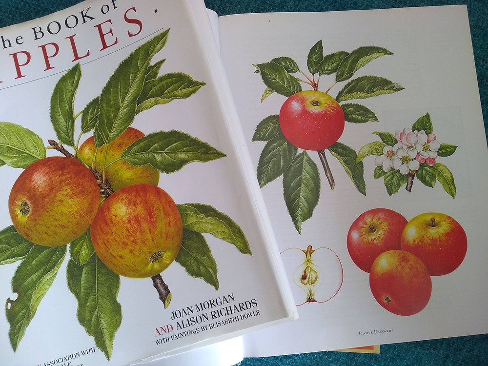 'The Book of Apples' by Joan Morgan and Alison Richards, 1993.