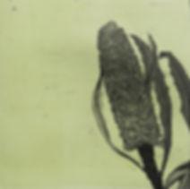 HELEN MACKAY NEW IMAGES Banksia-and-skul