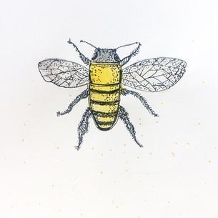 Biene-Illustration-Elisa-Kuzio-Illustration-Frankfurt am Main