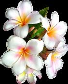Weddings in Kona Hawaii
