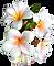 Big Island Hawaii Wedding Minister & Hawaii Wedding Officiant