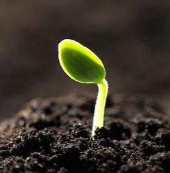 little-green-seedling-growing-soil-260nw