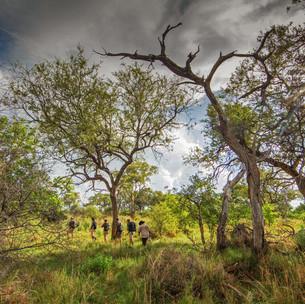 Walking Kwapa 10749-7880.jpg