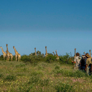 4 walking with giraffe medium resolution