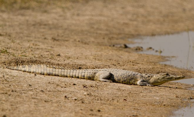 AGA Blog - About Crocodiles