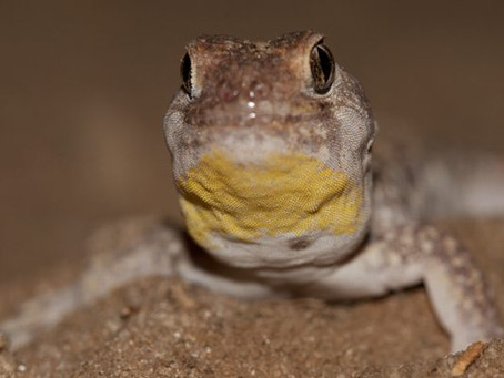 About Lizards
