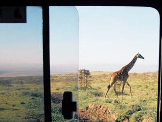 #annabelle Magazin: Wie ist es eigentlich, alles hinter sich zu lassen, um Safari-Guide zu werden?