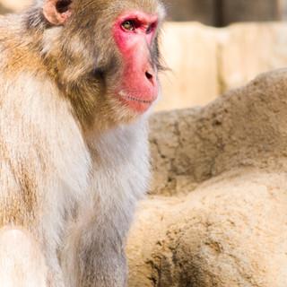 zoo_monkey-gFcKXlbCJfA-unsplash.jpg