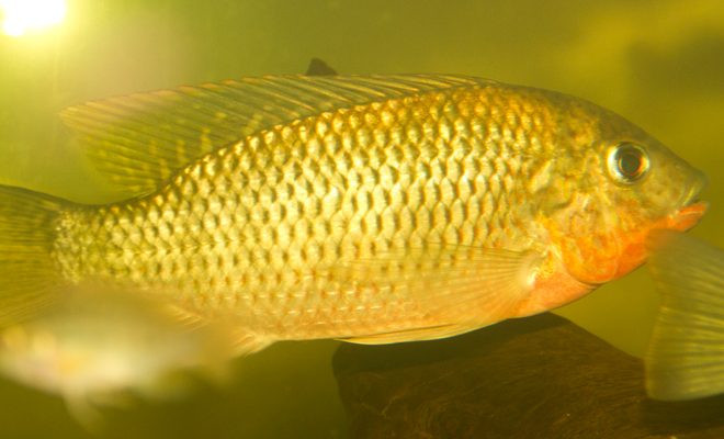 AGA Blog - About Fish