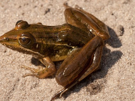 About Frogs