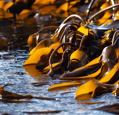 4 Major health benefits of seaweed snacks