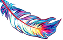 Image of colorful feather