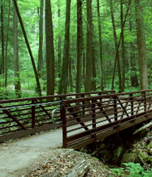 Image of a walking bridge into a forest symbolizing a way to relieve financial stress