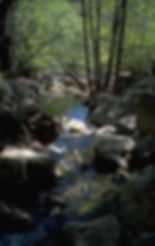 Images of a stream in a forest, symbolizing the healing power of nature