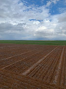 210519 Cascade Site Sowing.jpg