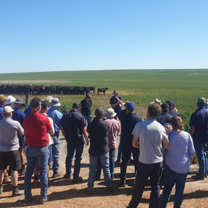 Record cattle field day