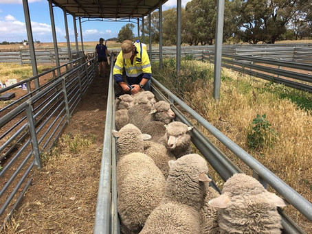New Elanco / ASHEEP Drench Resistance Project 2020