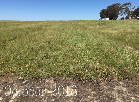 P Efficient Pastures 2018 - Tricky season with dry start