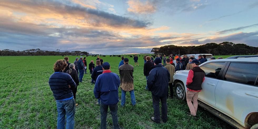 Cattle Field Day