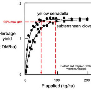 Serradellas and the development of more P-efficient pasture systems