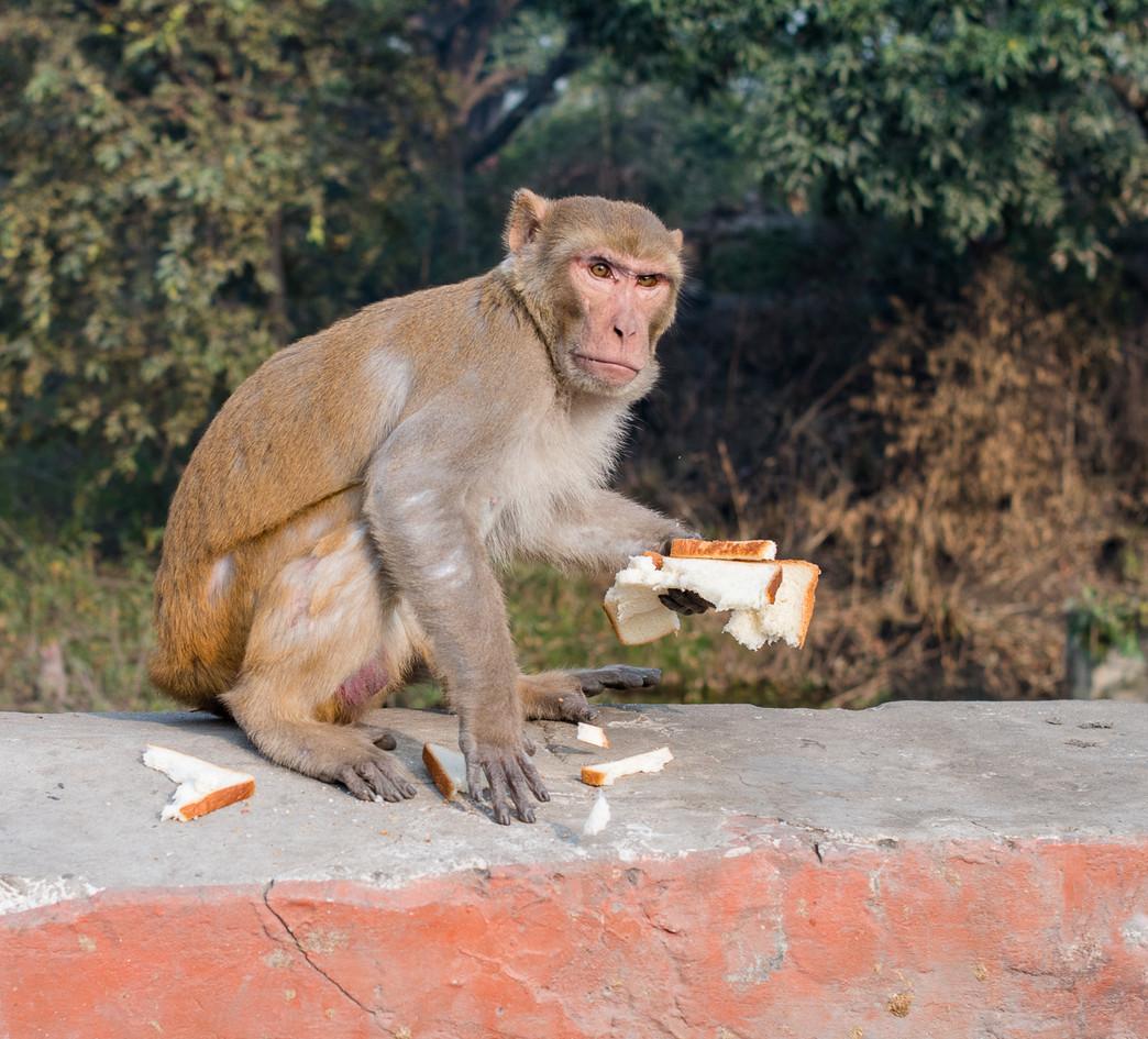 Monkey-5997.jpg