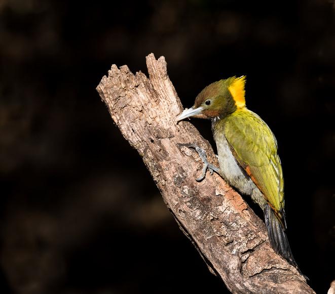 Woodpecker-6827.jpg
