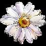 AdobeStock_234849673_edited.png