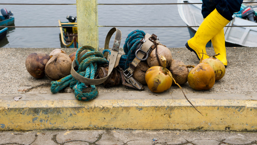 Refugee selling coconuts in San Lorenzo.