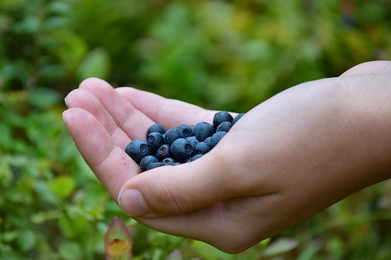 blueberries-1652422_1920.jpg