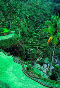 Rice terraces.jpg
