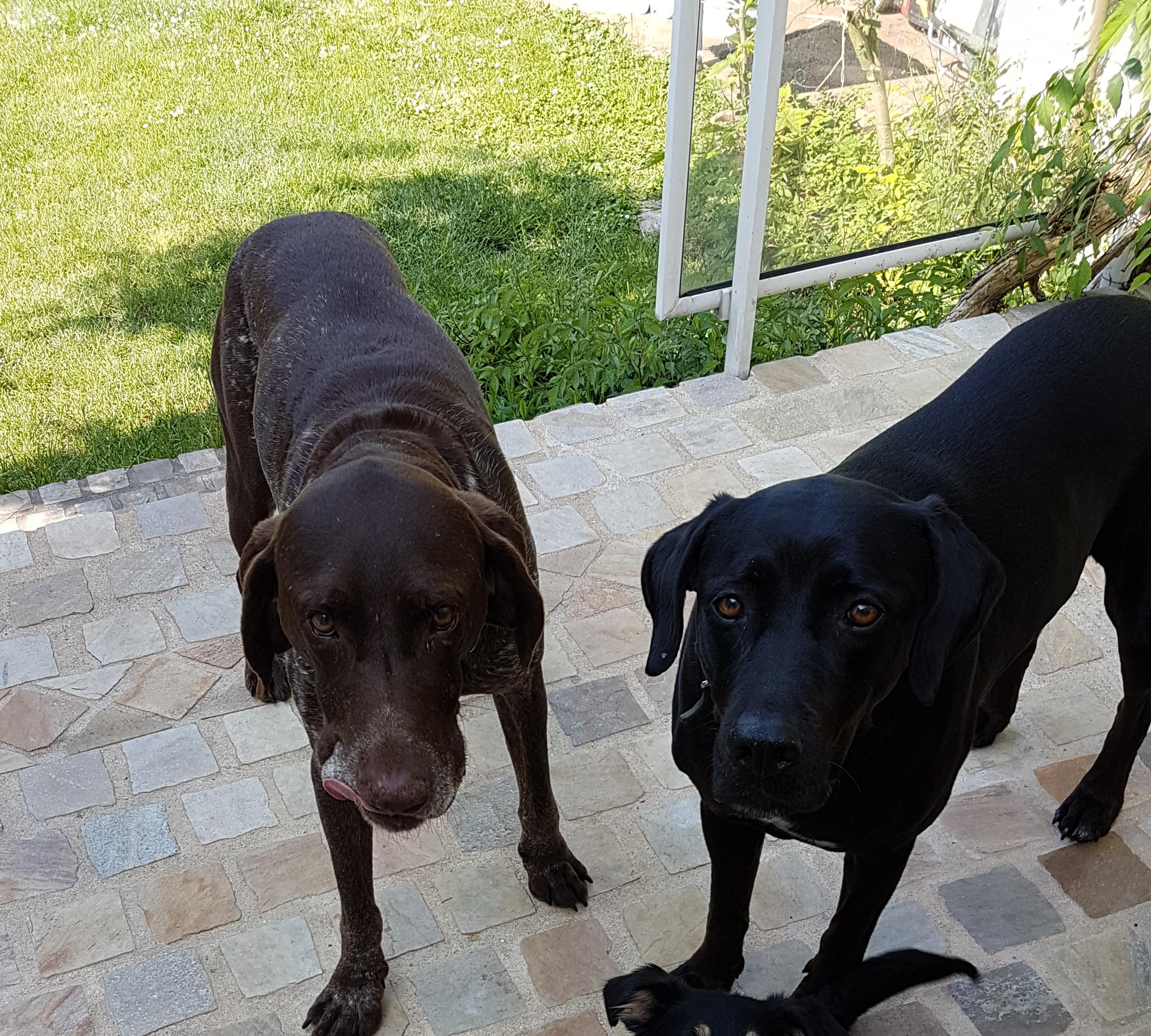 Sam et Ouba