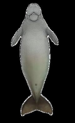 dugong2.png