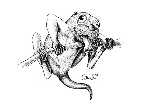 Day8_Otter_glassfrog.jpg