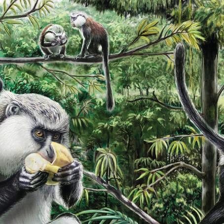 Creating a Mona monkey Illustration
