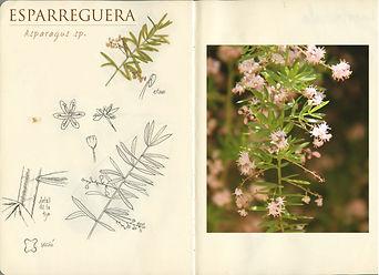 sketchbook botanical