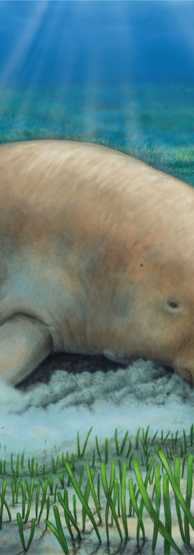 Dugong in its environment