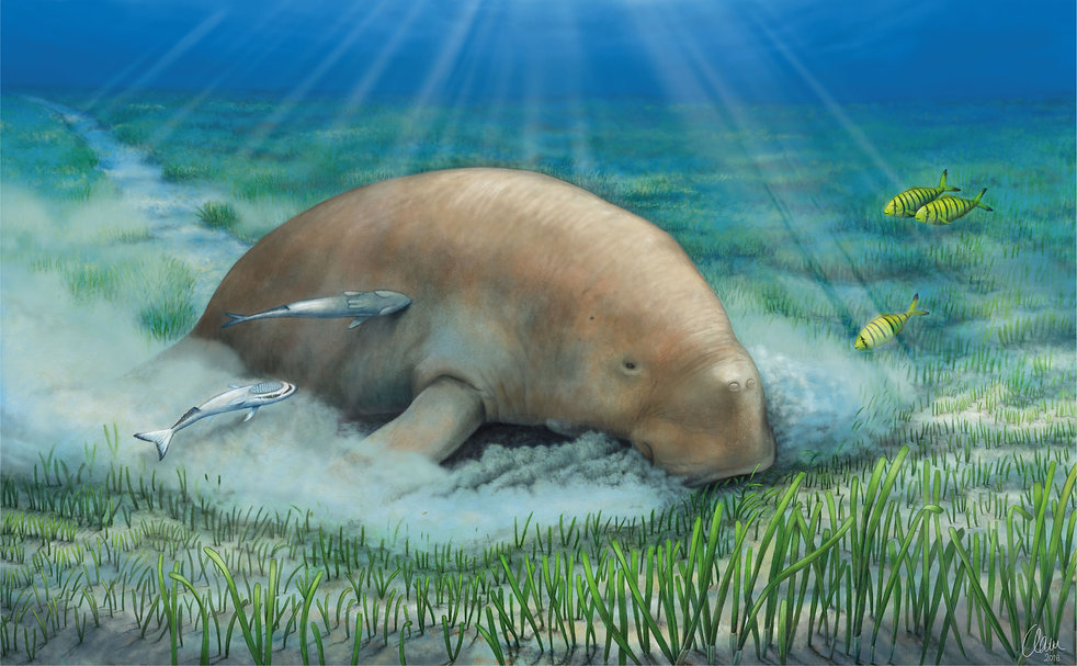 dugong on a meadow, digital painting