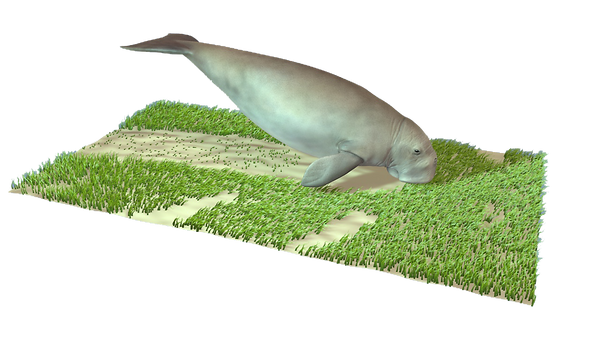 dugong_changes with meadow.png