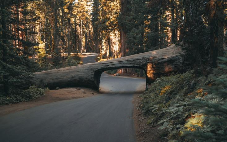 California-7.jpg